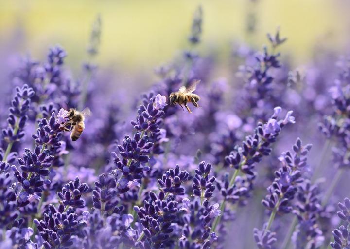 "I Owe You, ""Bee"""