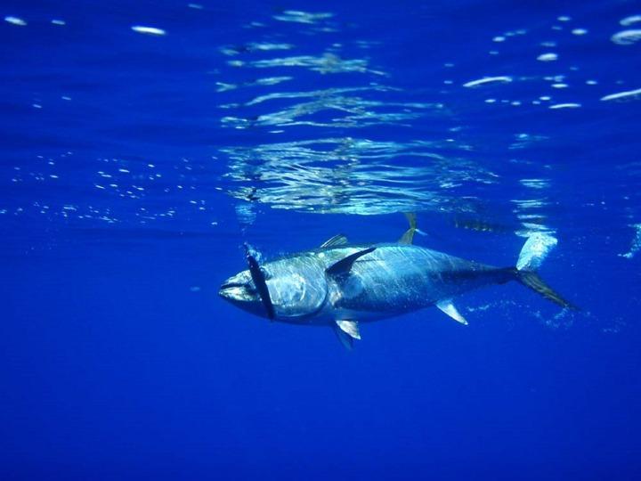 Suf-FISH-ient